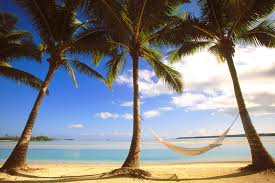 Download Hammock Palm Wallpaper 1999x1333