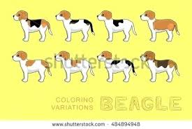 Beagle Coloring Dog Variations Vector Illustration Pages