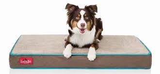 Top Rated Orthopedic Dog Beds by Best Orthopedic Dog Beds Reviews For Orthopedic Beds For Dogs