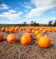 Spirit Halloween Torrington Ct by 100 Spirit Halloween Winston Salem 25 Best Town Salem Ideas