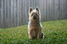 Non Shedding Small Dog Breeds List by List Of All Types Of Small Dog Breeds