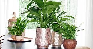 die 5 giftigsten zimmerpflanzen mein schöner garten