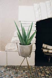 Small Plants For The Bathroom by 11 Perfect Plants For Your Condo Bathroom