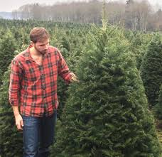 Seattle Christmas Tree Disposal by Snow Day Farms Free Christmas Tree Delivery