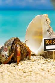 Do Hermit Crabs Shed Their Legs by What Happens When A Hermit Crab Dies Animals Mom Me