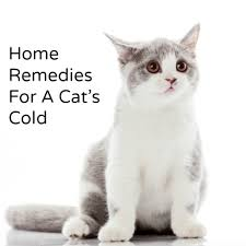cat runny nose home remedy for a cat s cold hillbilly