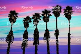 California Sunset Palm Trees Washingtonia Western Coast Royalty Free Stock Photo