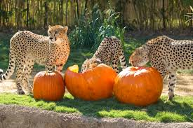 Porcupine Eating Pumpkin Gif by Lions Fight For Rhinos Page 2