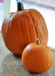 Types Of Pumpkins For Baking by What Is A Sugar Pumpkin Baking Bites