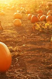 Best Pumpkin Patch Snohomish 52 best places to see images on pinterest places to see places