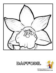 Free Tropical Flower Coloring Pictures Of Hibiscus Birds Paradise Lotus Classic Sheet Calla Lily Daisy
