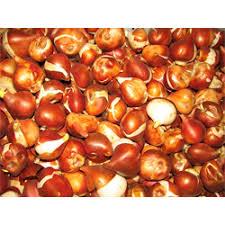 bulk tulip bulbs flowers bulbs for sale terra ceia farms