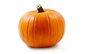 Pumpkin Picking Places In South Jersey by Pumpkins Farm Fresh Pick Your Own Pumpkins When To Pick