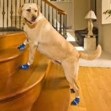 woodrow wear power paws non slip socks for dogs dog socks dog