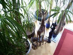 ungiftige pflanzen für katzen co haushaltstipps und
