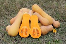 Types Of Pumpkins For Baking by Butternut Squash Wikipedia