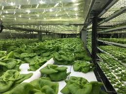 industriel farm cuisine los angeles ca local roots farms