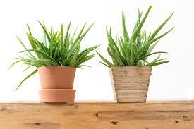 quelles plantes cultiver au bureau