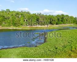 Alachua Sink Gainesville Fl by Alachua Sink Paynes Prairie State Preserve Florida Stock Photo