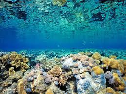 Reef Wallpaper HD Resolution MZX Earth Pinterest