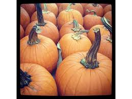Apple And Pumpkin Picking Maryland by Where To Find The Perfect Pumpkin In Howard County Columbia Md