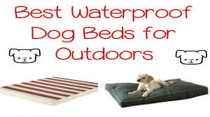 Top Rated Orthopedic Dog Beds by Laifug Orthopedic Memory Foam Pet Dog Bed Review Best Waterproof