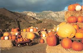 Bonita Pumpkin Patch Sweetwater Road by 2017 聖地牙哥不可錯過的趣味南瓜園 Pumpkin Patch 總攻略