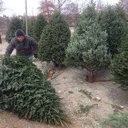 Christmas Tree Shop Warwick Rhode Island by Christmas Tree Shop 19 Photos U0026 22 Reviews Christmas Trees