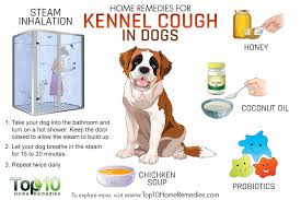 kennel cough home reme s Dog Pinterest