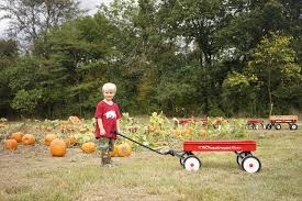Pumpkin Patches In Arkansas by 17 Pumpkin Patches In Central Arkansas To Visit This Fall Little