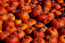 Storing Pumpkin Pieces by How To Dry Pumpkins Livestrong Com
