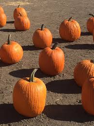 Pumpkin Patch In Colorado Springs Co 2013 by Mcgrath Brothers Great Pacific Pumpkins 16 Photos Christmas