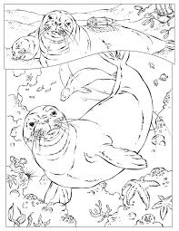 Free Monk Seal Coloring Page