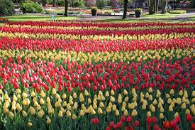 2018 visit keukenhof tulip and flower gardens south