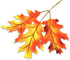 Leaves image fall leaf clipart no background clipartbold