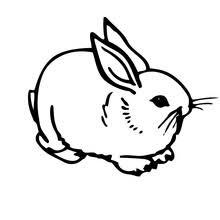Rabbit In The Garden Domestic