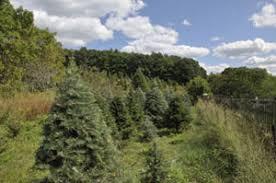 Christmas Tree Farm Near Lincoln Nh by Houde U0027s Christmas Tree Farm In Marlborough Massachusetts