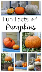 Cinderella Pumpkin Seeds Australia by Fun Facts About Pumpkins Town U0026 Country Living
