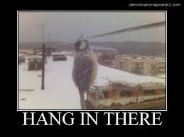 Hang In There Frozen Bird