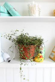 Best Plant For Bathroom Feng Shui by Bathroom Plant Bathroom Decorating Ideas Environment For Best
