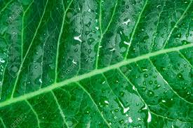 100 Natural Geometry Natural Geometry Abstraction Green Leaf After Rain Nature