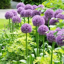 deer resistant bulbs for sale buy flower bulbs in bulk save