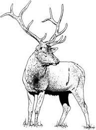 Gorgeous Elk Deer Coloring Page