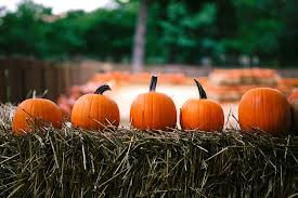 Pumpkin Patch Denver Pa by 10 Things To Add To Your Fall Bucket List With Kids Todaysmama