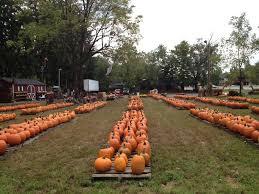 Pumpkin Picking Nj by Ward U0027s Pumpkin Patch Ridgewood Nj