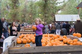 Corona Pumpkin Patch Hours by The Pumpkin Factory Photo Gallery Loc