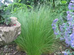 Garden Design: Garden Design With Ornamental Grasses And Grass ... Home And Garden Tv Show Interiror And Exteriro Design Design Ideas Your Cat Will Love Hgtvs Decorating Blog Hgtv Dream 2002 Chesapeake Bay 20081997 With Castle Hunters Things You Didnt Know About Redesign Decor Tv Caribbean Otography Website Channel Stock Photo Royalty The High Low Project Easy Landscaping