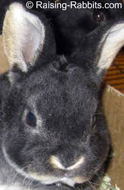 rabbit bedding explore the many pet bedding options