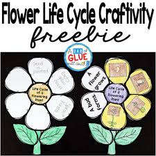 Life Cycle Of A Pumpkin Seed Worksheet by Flowering Plant Life Cycle Craftivity A Dab Of Glue Will Do