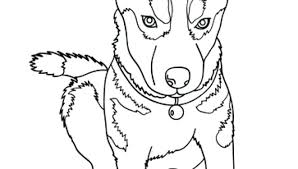 Husky Coloring Pages X Realistic